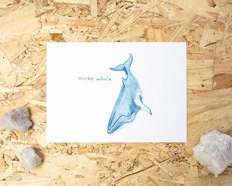 Minke Whale Postcard // Mini Print