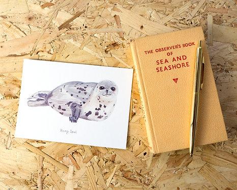 Harp Seal Postcard // Mini Print