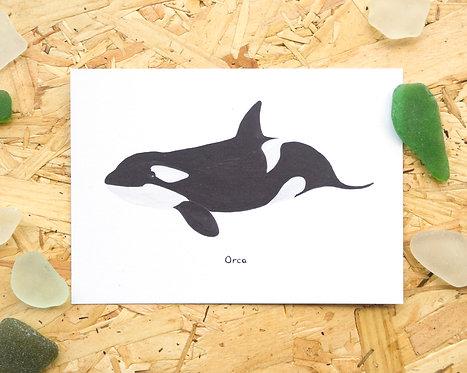 Orca Postcard // Mini Print