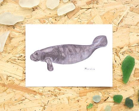 Manatee Postcard // Mini Print