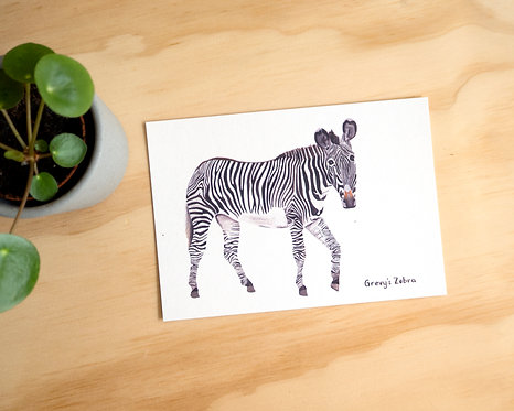 Zebra Postcard // Mini Print