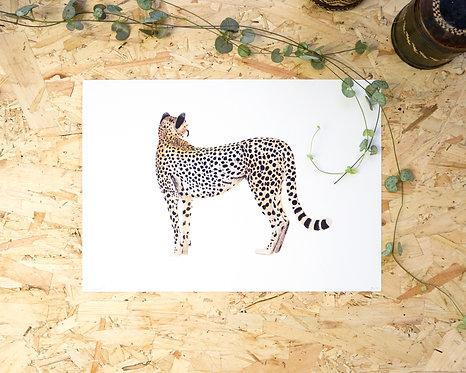 Cheetah Print A4