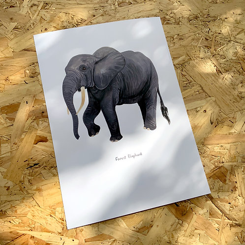 Forest Elephant Print // A4 or A3