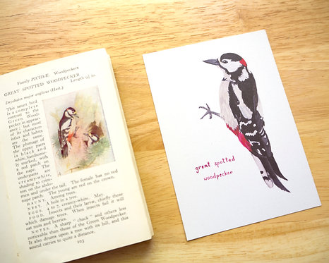 Great Spotted Woodpecker Postcard // Mini Print