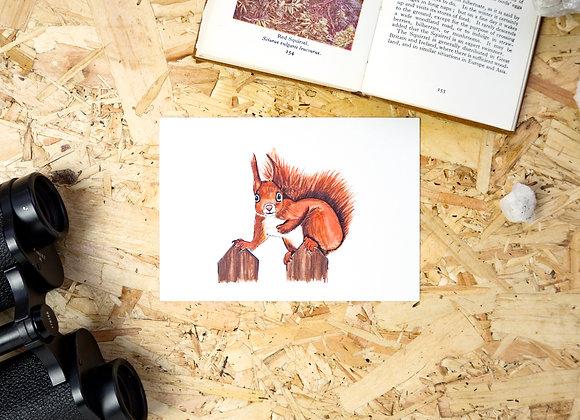 Red Squirrel Postcard // Mini Print