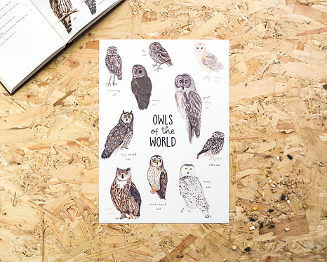 Owls of the World Print A4 // A3
