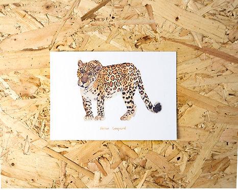 Amur Leopard Postcard // Mini Print