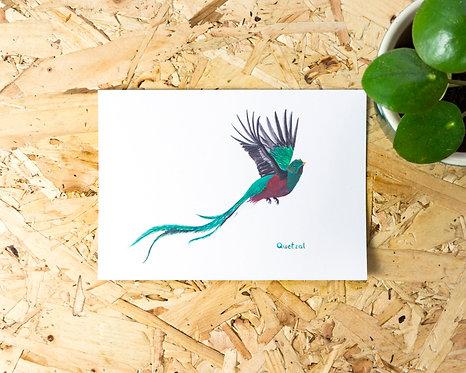 Quetzal Postcard // Mini Print