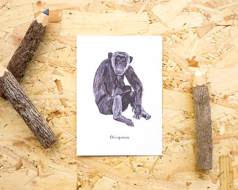 Chimpanzee Postcard // Mini Print