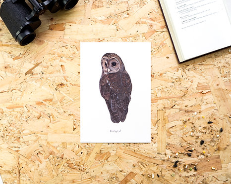Tawny Owl // A4 or A5