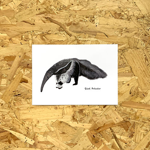 Giant Anteater Print // A5