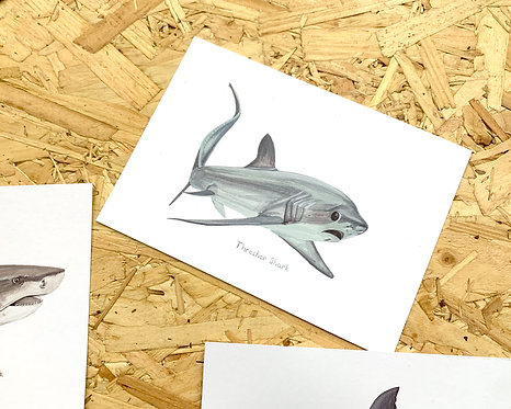 Thresher Shark Postcard // Mini Print