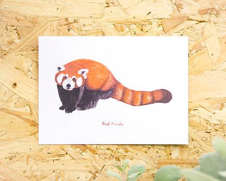 Red Panda Postcard // Mini Print