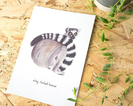 Ring-Tailed Lemur Postcard // Mini Print