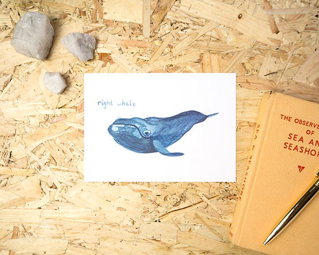 Right Whale Postcard // Mini Print