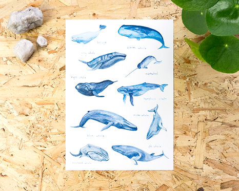 Whales of the World Print A4 // A3