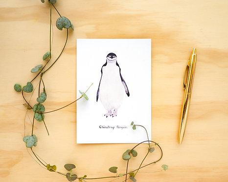 Chinstrap Penguin Postcard // Mini Print
