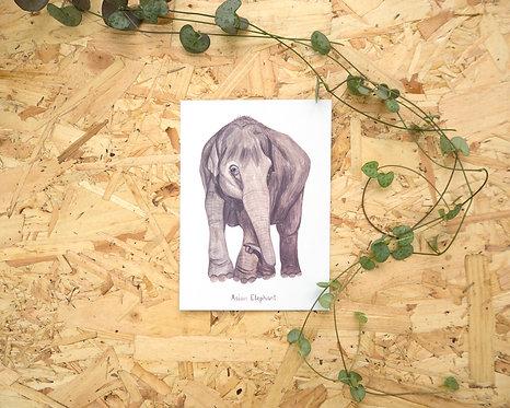 Asian Elephant Postcard // Mini Print