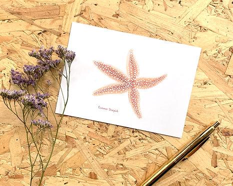 Common Starfish Postcard // Mini Print