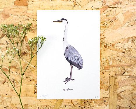 Grey Heron Print // A4