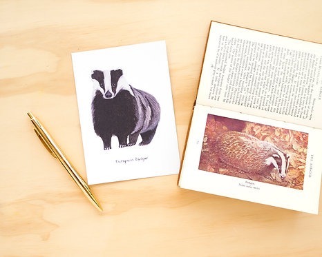 European Badger Postcard // Mini Print