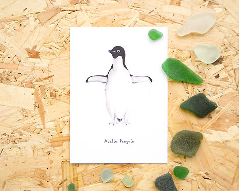 Adélie Penguin Postcard // Mini Print