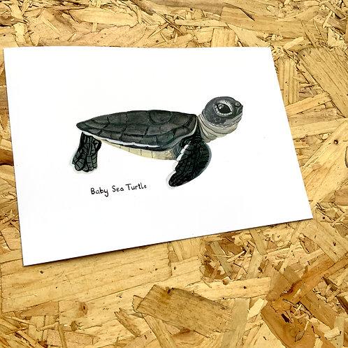 Baby Sea Turtle Print // A5