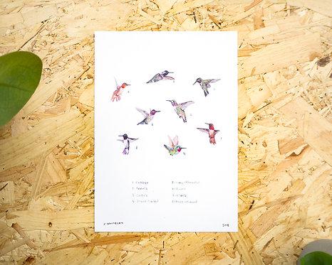 Hummingbirds Print A4 // A5