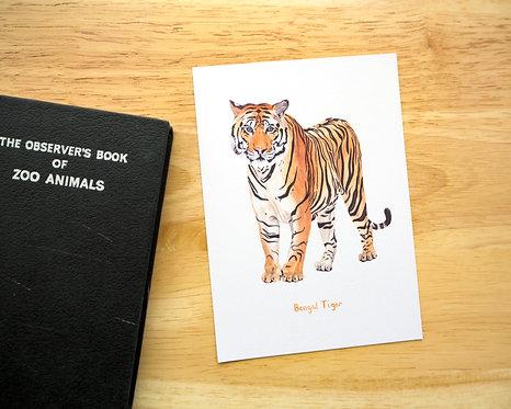 Bengal Tiger Postcard // Mini Print