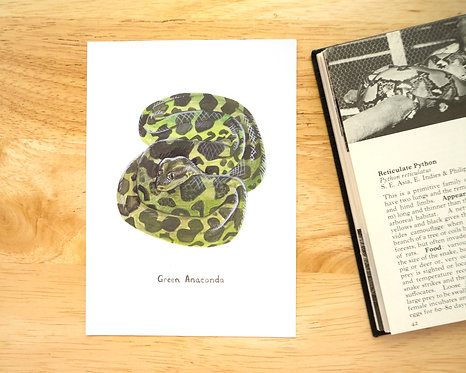 Green Anaconda Postcard // Mini Print