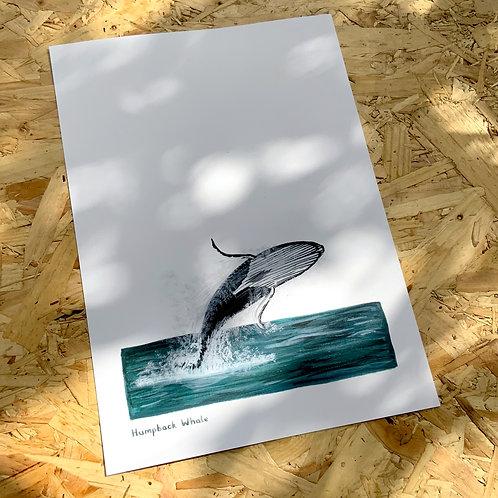 Humpback Whale Jumping Print // A4