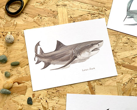 Lemon Shark Postcard // Mini Print