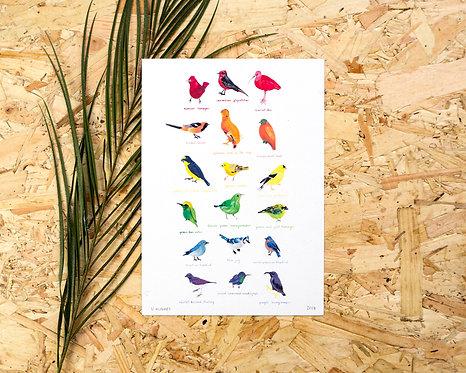 Rainbow Birds Print A4 // A5