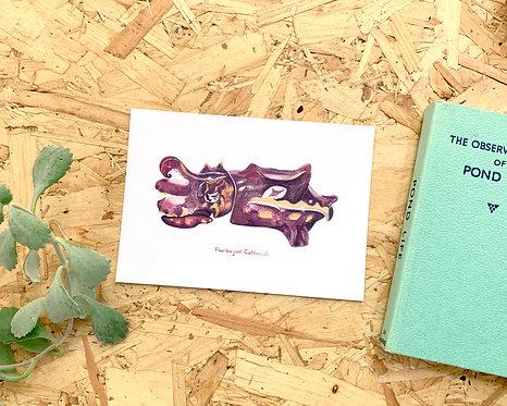 Flamboyant Cuttlefish Postcard // Mini Print