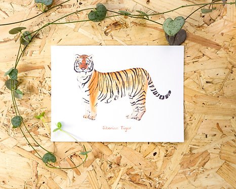 Siberian Tiger Postcard // Mini Print