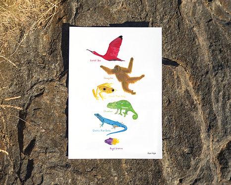 Animal Rainbow of Hope // free download - enter code: FREERAINBOW