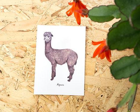 Alpaca Postcard // Mini Print