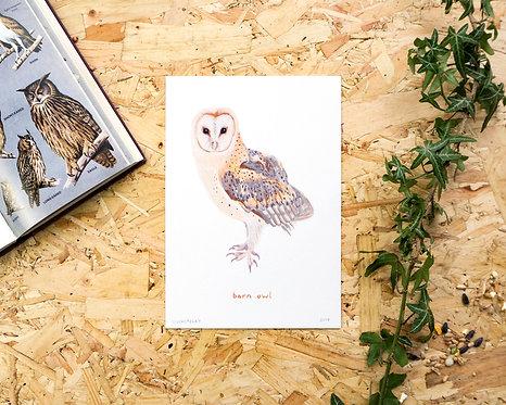 Barn Owl A5 // A4