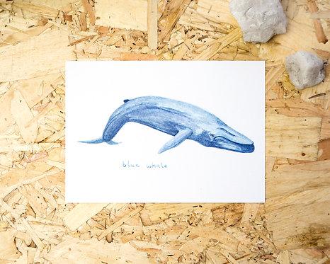 Blue Whale Postcard // Mini Print