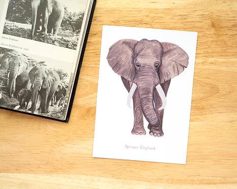 African Elephant Postcard // Mini Print
