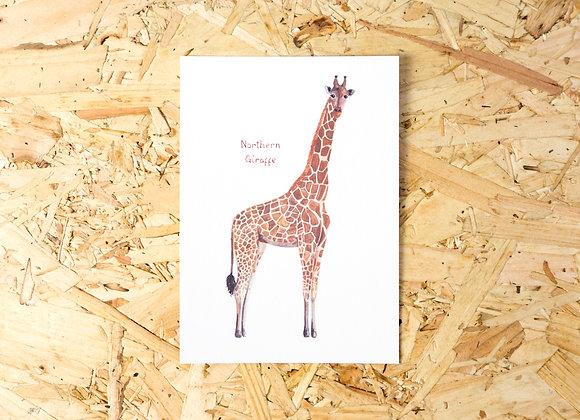 Northern Giraffe Postcard // Mini Print