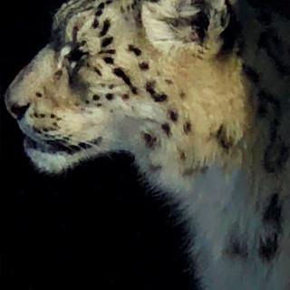 3-4 leopard.JPG