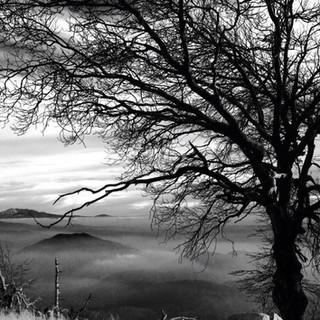 B&W Tree Clouds on the Rim.JPG