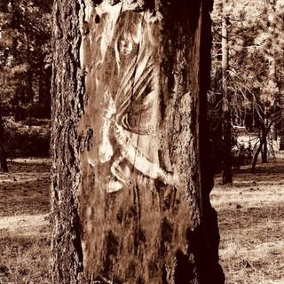 amy tree.jpg