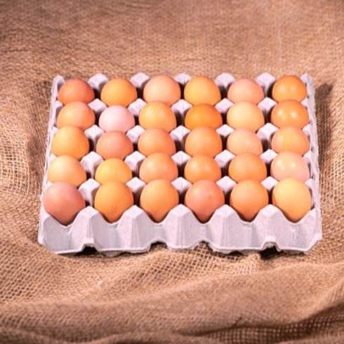 Free Range 800g Jumbo in a tray of 30 eggs
