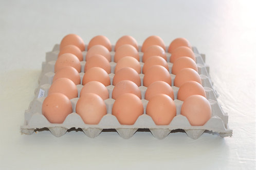 Free Range 700g Extra Large in a tray of 30 eggs