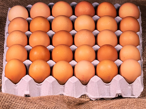 Grain Fed 700g Extra Large in a tray of 30 eggs