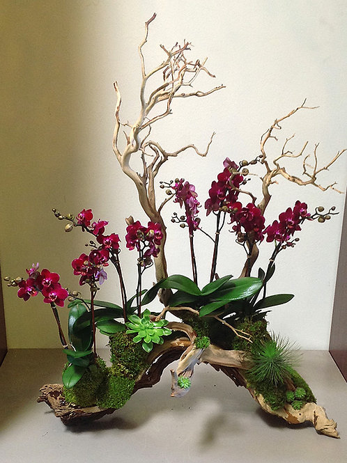 Mini Phalaenopsis Orchids on Grapevine Trunk
