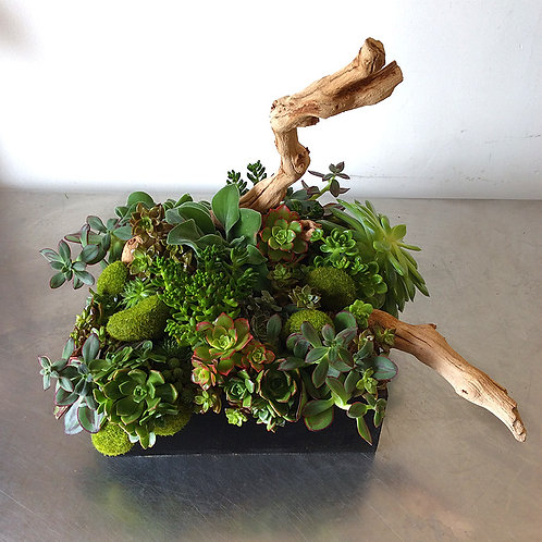 Assorted Succulent Wood Box Garden