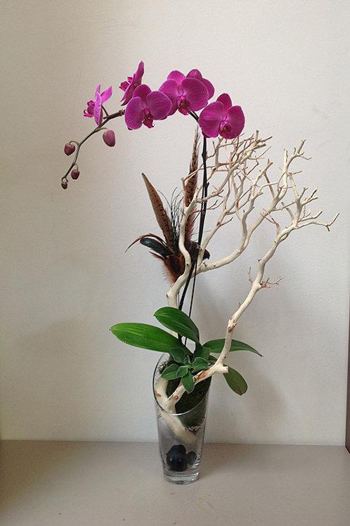 Floating Phalaenopsis Orchid